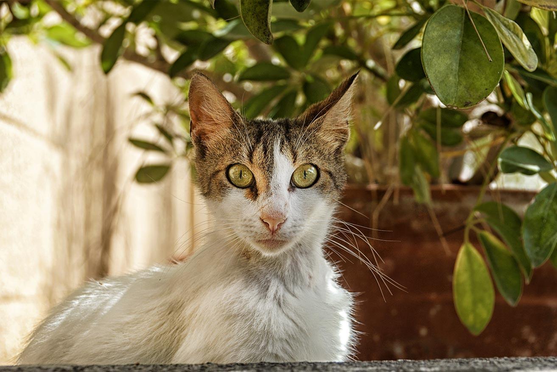 Коты Родоса и Сими