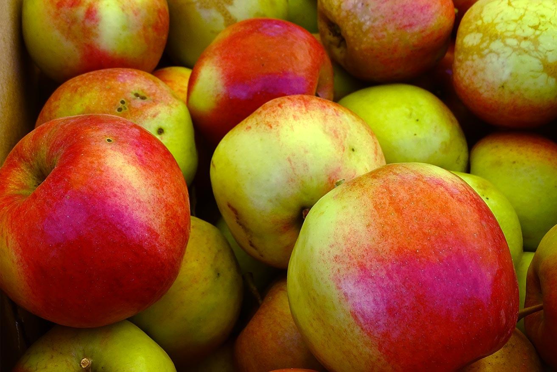 Елец. Фестиваль «Антоновские яблоки»